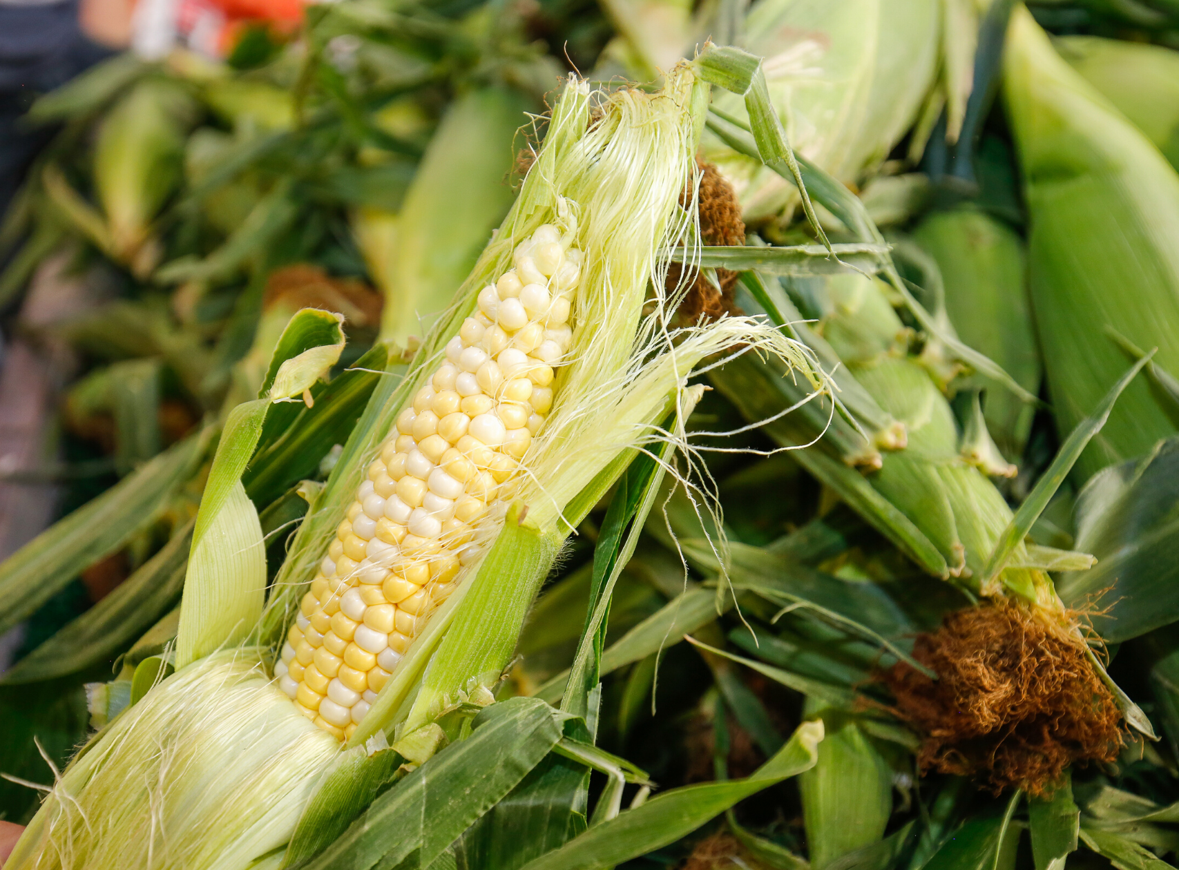 Colorado sweet corn