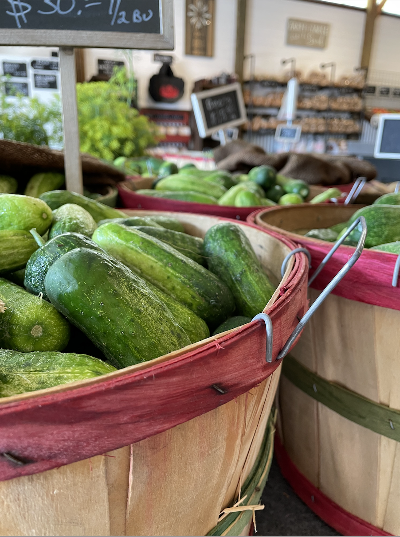 Homegrown pickling cucumbers by the half bushel