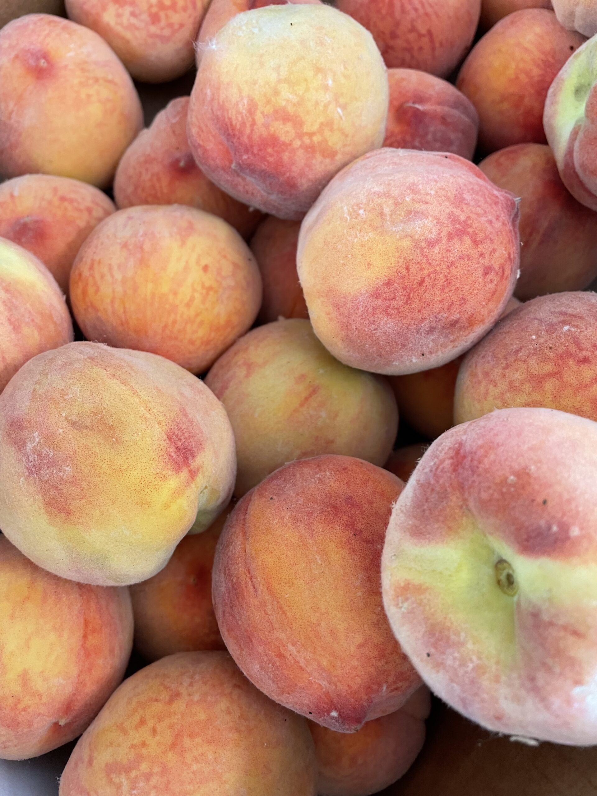 Freestone Palisade peaches